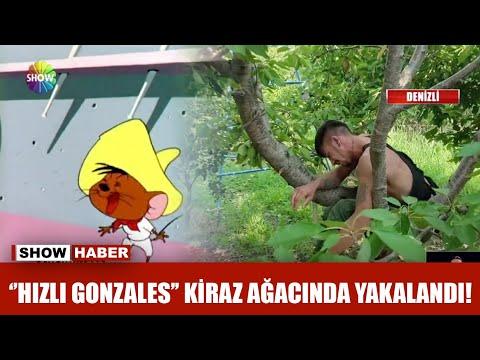 ''Hızlı Gonzales'' kiraz ağacında yakalandı!