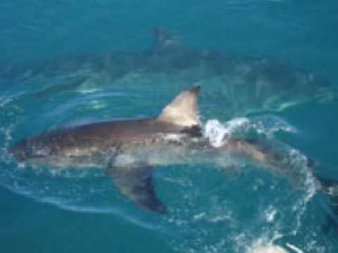 South African Ocean