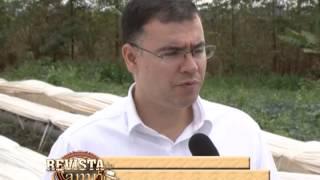 TÚNEL BAIXO É USADO EM CULTIVO DE MORANGOS EM BRAZILÂNDIA