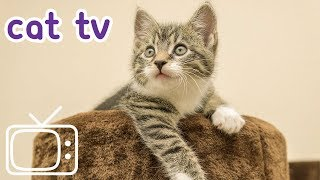 Cat TV: Bird Extravaganza! Videos for Cats to Watch (NEW)