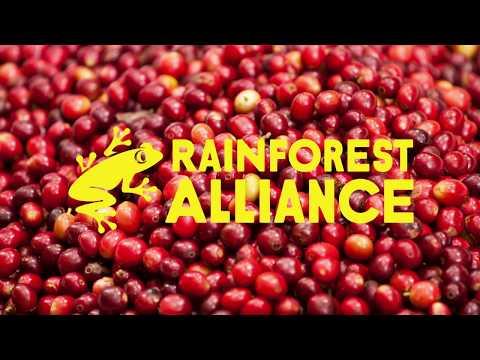 Rainforest Alliance Logo Evolution