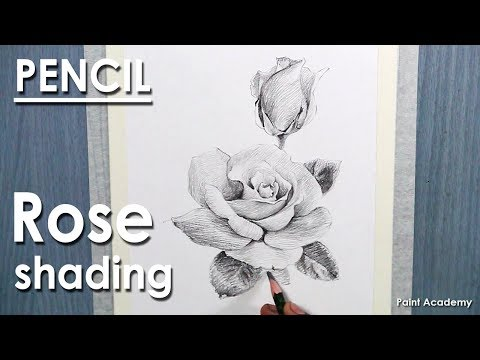 Pencil Drawing : How to shade A Rose