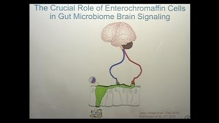 The Microbiome Mind and Brain Interactions