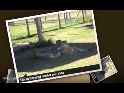 """Stellenbosch – cheetahs at Spier"" Amy_chris's photos around Stellenbosch, South Africa (spier)"