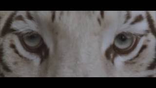 """Our Last Night - """"White Tiger"""" (OFFICIAL)"""