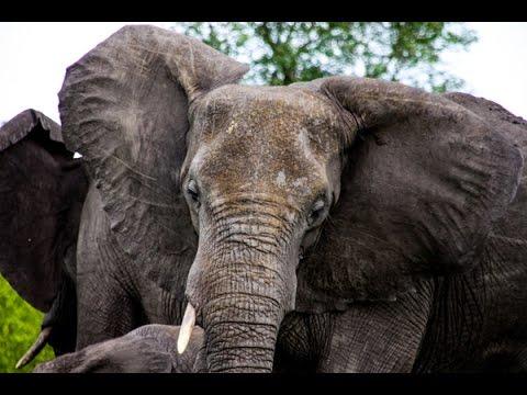 Game walk through Kruger National Park, South Africa