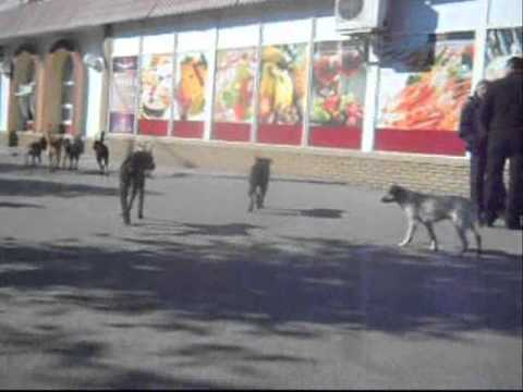 26.10.2011 Zaporizhzhya.Ukraine.Dog's life..wmv