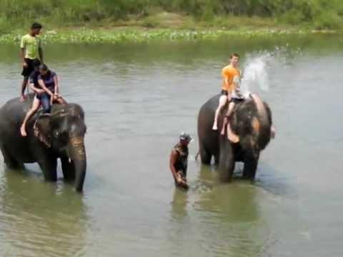 【Nepal Chitwan】ネパール  チトワン 象の水浴び 4/6