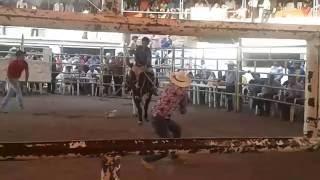 jaripeo lienzo charro los plateados en zacatepec morelos