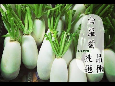 【冬】白蘿蔔正便宜,如何挑選與保存才好吃?  | 台灣好食曆 - YouTube