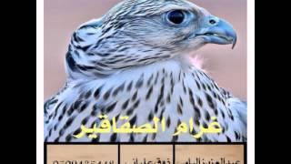 شيلة غرام الصقاقير أداء / عبدالعزيز اليامي
