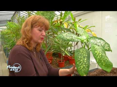Sfaturi despre îngrijirea plantelor atunci când sunt scoase afară primăvara sau aduse în casă
