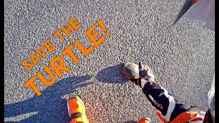 Saving a Turtle! | Riders are good people!