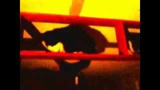 Mi gata isis y mi gatita anubis en el techo tratando de bajar xd