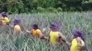 Pineaple womens teamwork