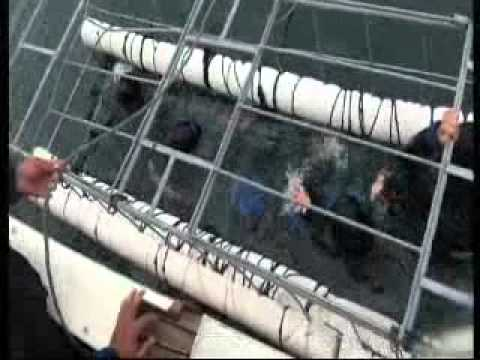 Great White Shark Cage Diving in South Africa