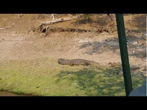 Crocodile alongside the Chobe River Bank, South Africa – 2 Idiots Abroad