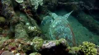 My Underwater Adventure 9