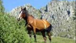 sciogli le trecce i cavalli
