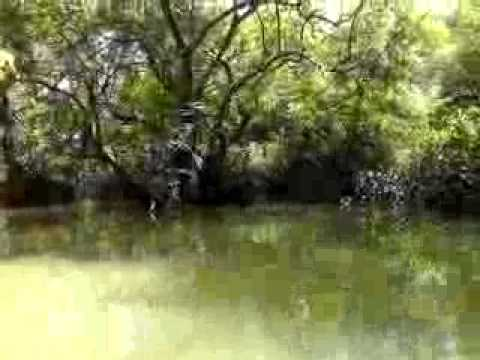 Ratargul Swamp Forest Sylhet Bangladesh