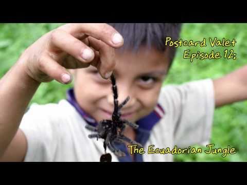 The Ecuadorian Jungle PV012