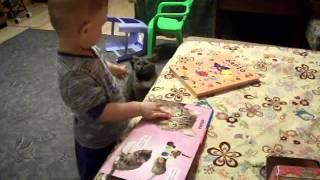 книжка и кошки