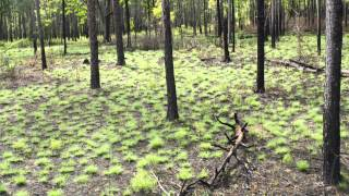 How Fire Can Restore a Forest: A Time-Lapse (Tree View)