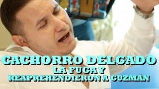 """""""EL CACHORRO"""" DELGADO - """"LA FUGA"""" Y """"REAPREHENDIERON A GUZMAN"""" (Versión Pepe's Office)"""