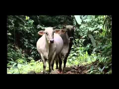 Ecuador a tu Alcance – Provincia de Esmeraldas