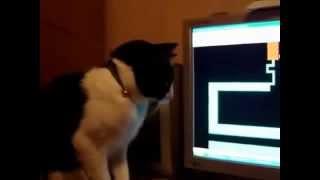Gato no pc (jogo do labirinto do Exorcista)