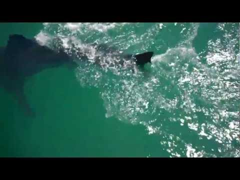 Eye 2 Eye With The Great White Shark SOUTH AFRICA