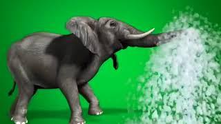 Wild Animals Green Screen Effect