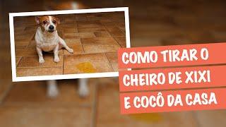 Como Tirar o Cheiro de Xixi de Cachorro da sua Casa | Meu Cão Companheiro