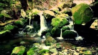 Madeira Island - Laurel Forest
