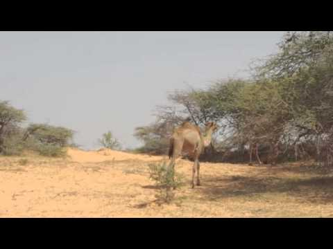 N°3 Mauritanie