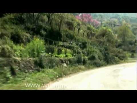Journey to Kohima