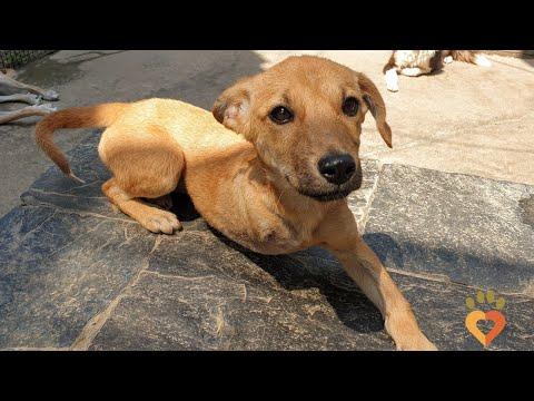 Dharamsala Animal Rescue