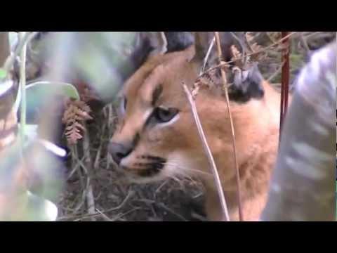 Zuid Afrika 4 – Plettenberg bay – Tenikwa Wild Cats – Monkeyland – Birds of Eden