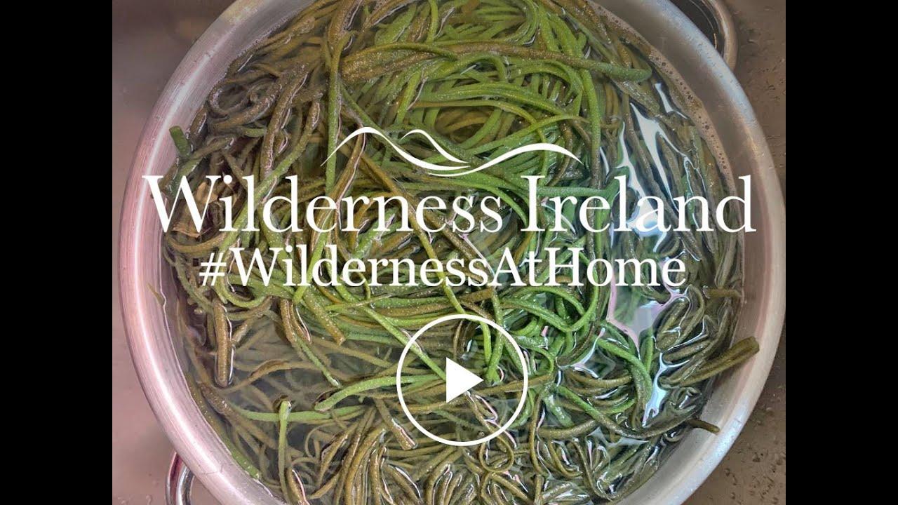 Seaweed Foraging in Ireland