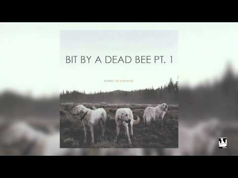 foxing-bit-by-a-dead-bee-pt-1-audio-triplecrownrecords