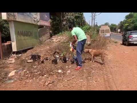 feeding pups in goa