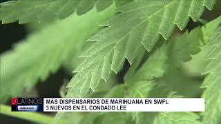 Nuevos dispensarios de marihuana medicinal en SWFL