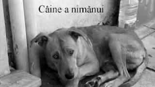 GraTima - Caine a nimanui