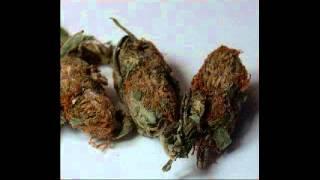 Miki Debrouya   Weed