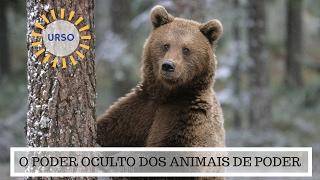 O Poder Oculto do Animal de Poder - Significado do Urso
