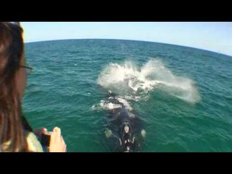 Whales & Great White Sharks – South Africa