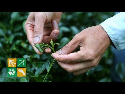 慈心映像館-綠保標章-中文版(10分鐘) - YouTube
