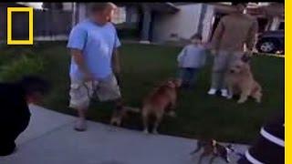 Calm Down!   Dog Whisperer