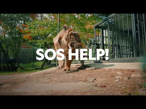 Wildlife SOS 6 episode series with Nat Geo Wild. Aired in over 138 countries.