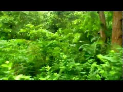 Dense jungles near Dinajpur, Bangladesh